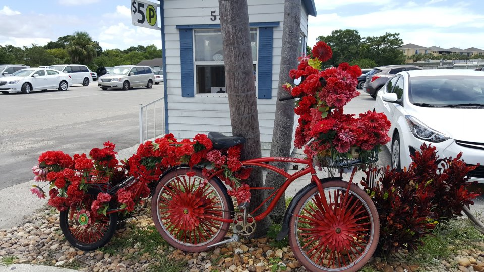 A red bike propped against a tree decorated with tons of red flowers on Dodecananese Blvd. in Tarpon Springs