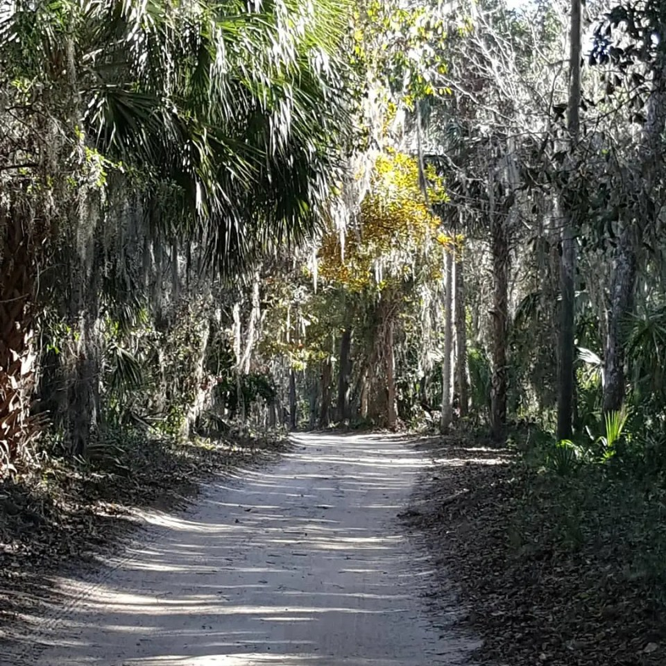 shows a country road overhung with tree limbs in Central Florida
