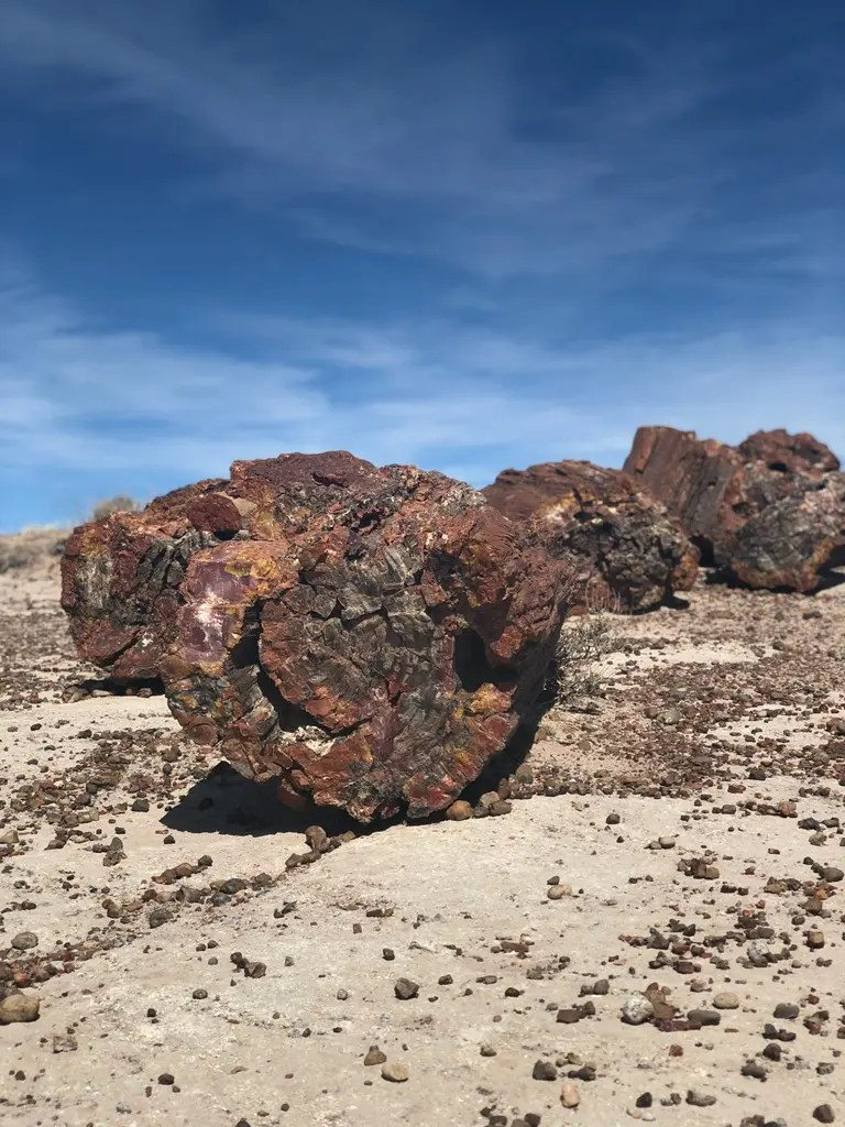 shows petrified wood in one of the best places to visit in Arizona, the Petrified Forest