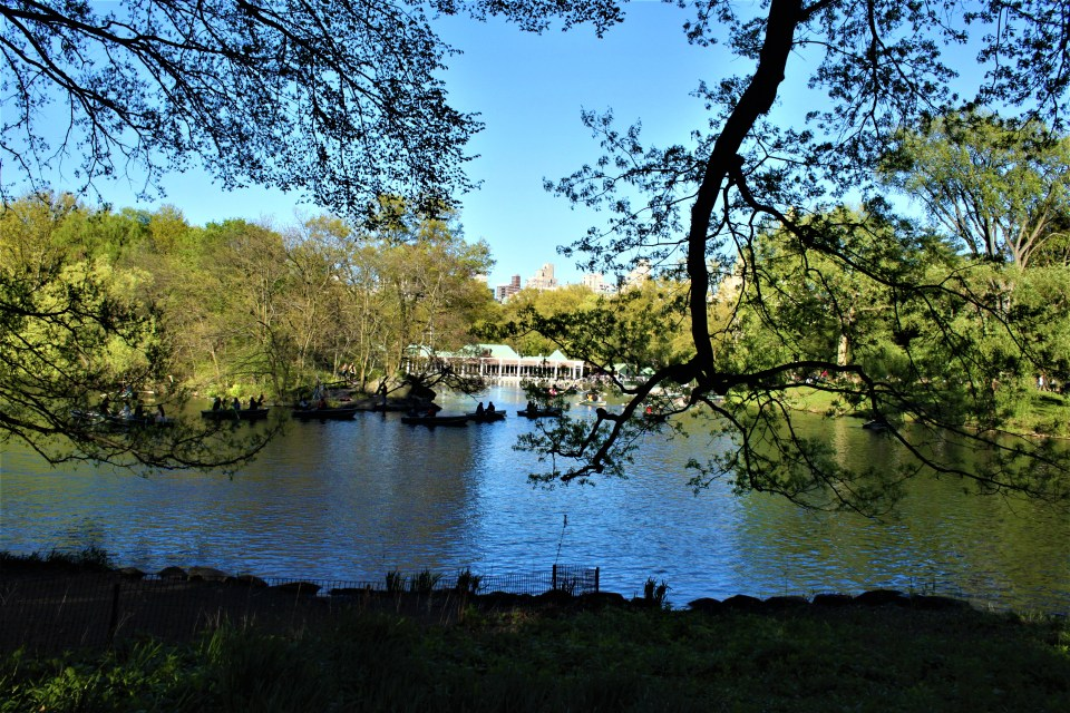 Shows Central Park where you can stroll around and find many things to d in New York City for free.