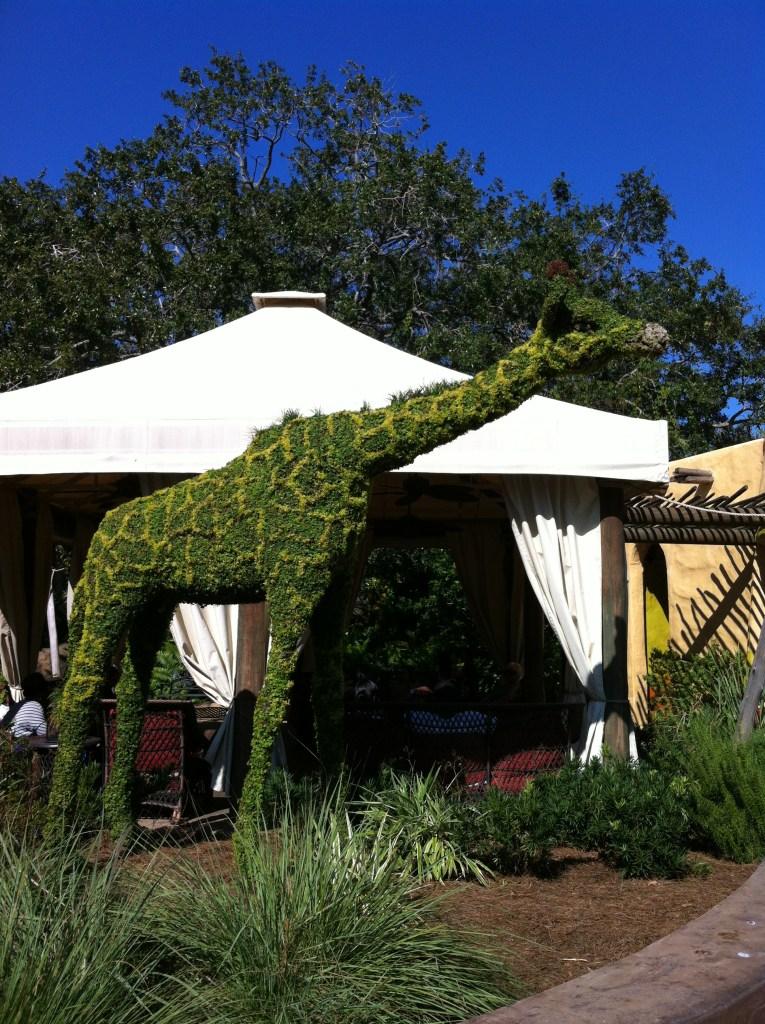 topiary giraffe at Busch Gardens FL