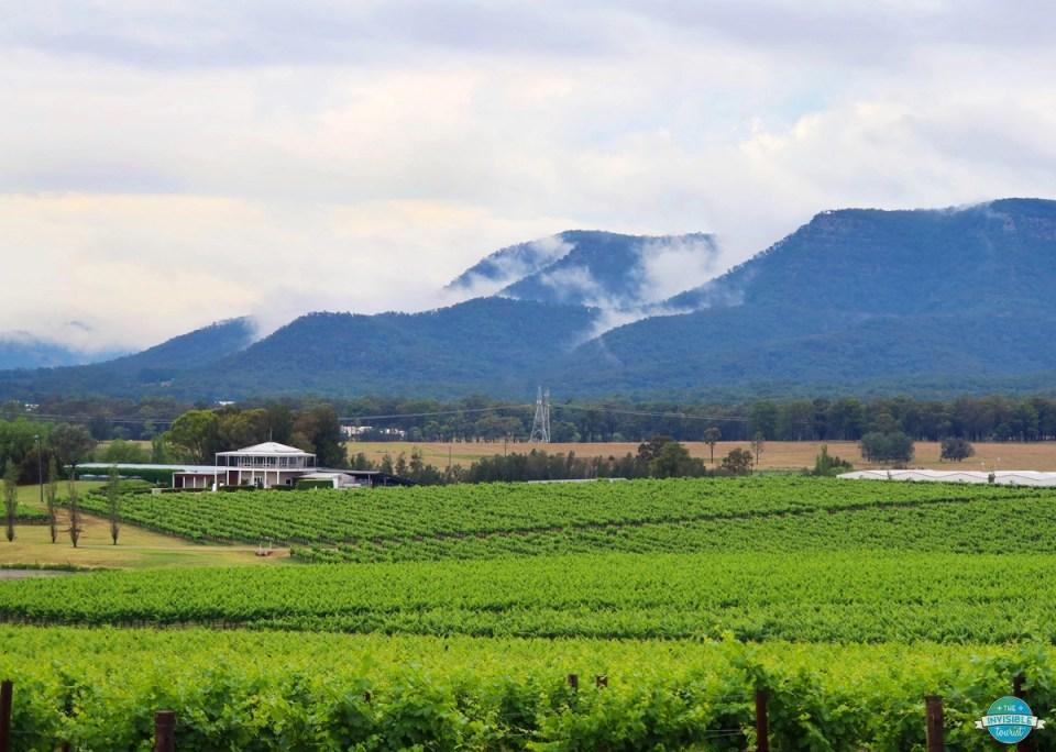 vineyards in Hunter Valley in Australia