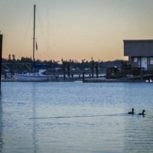 Dockton Park Vashon Island Washington