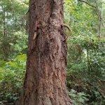 Vashon Island Bike in the Tree
