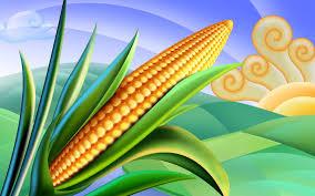 corn-1022_wikipedia