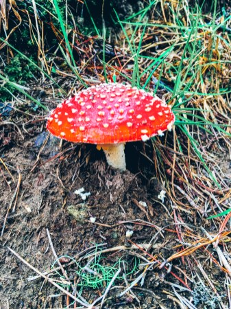 Wild mushroom in Salento Colombia