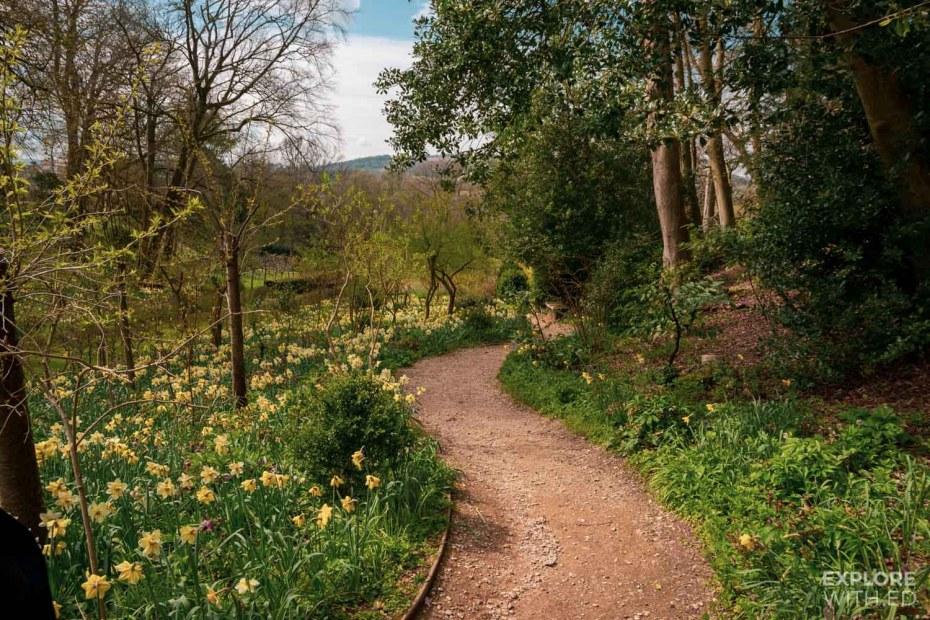 Daffodil season in Rococo Garden