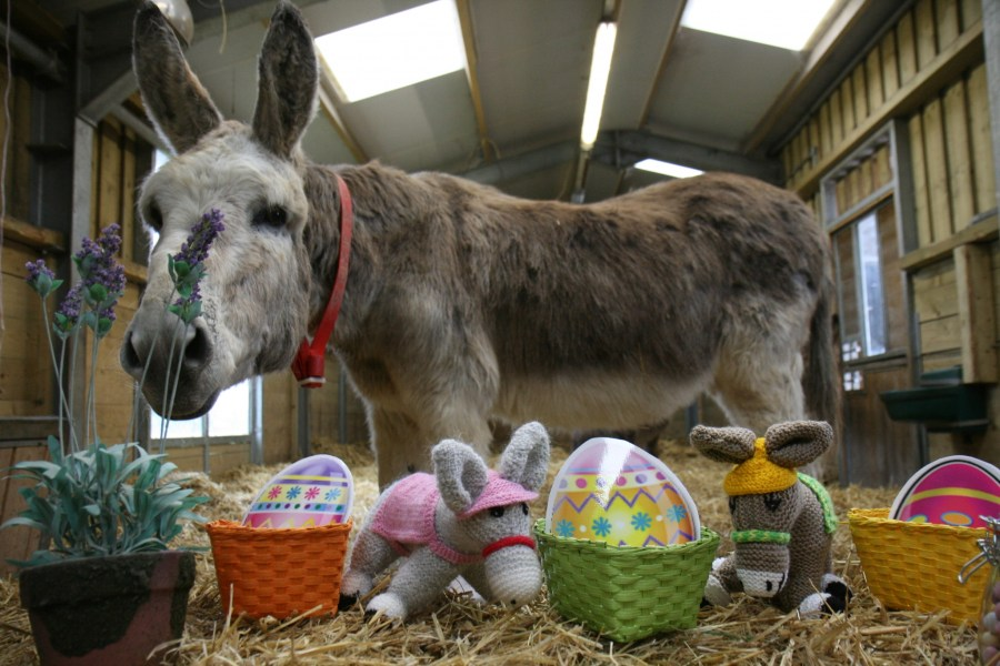 11 things to do in and around Exeter for the Easter holidays 2018, exploring exeter