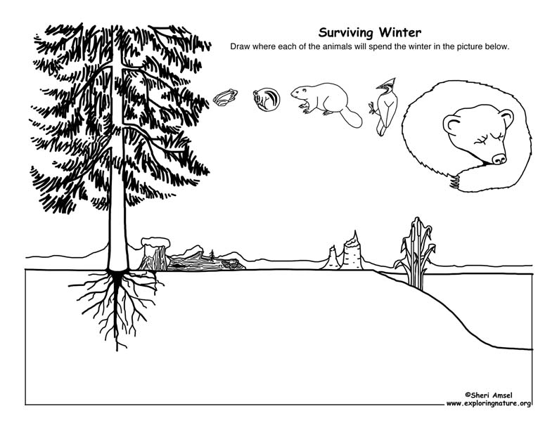Surviving Winter Drawing Activity