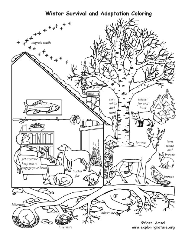 Winter Survival and Adaptation Coloring Page