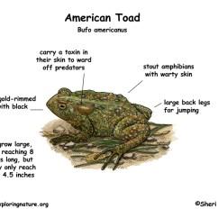 Frog And Toad Venn Diagram 2003 Nissan Altima Parts