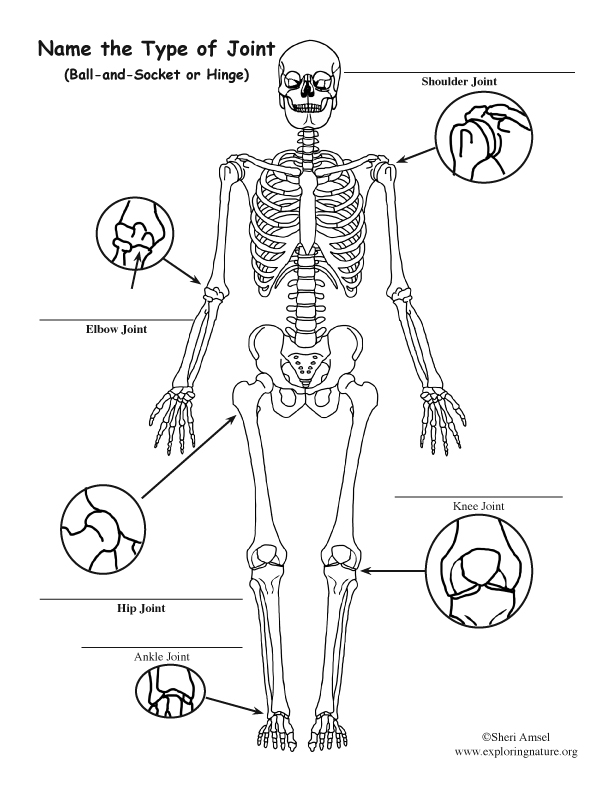 Joints of the Body Labeling Page (For Elementary)