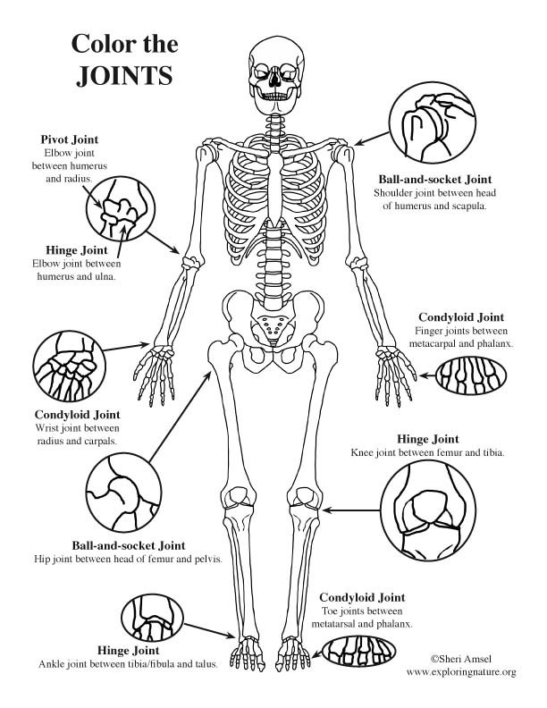 Joints of the Body (Advanced) Coloring Page