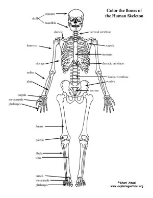 Skeleton (Labeled) Coloring Page