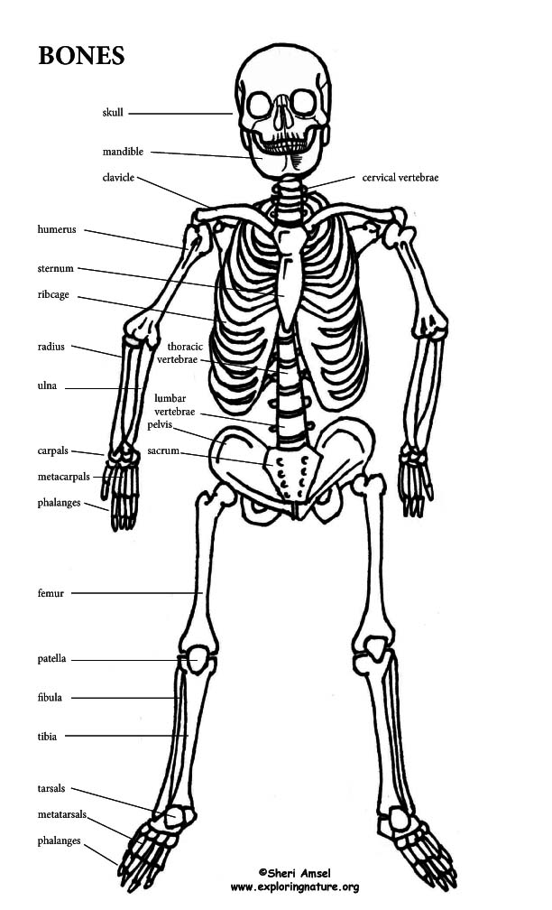 1000+ images about Human Body (Anatomy) on Pinterest