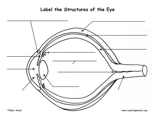 Vision and the Structure of the Eye