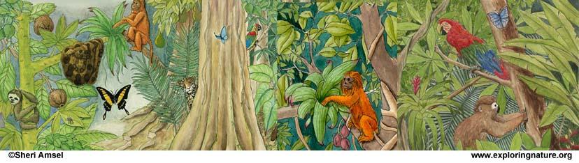 Draw an Amazon Rainforest
