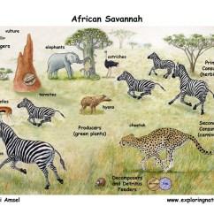 Tropical Rainforest Food Web Diagram Ford 8n Generator Wiring African Veldt And Savannah