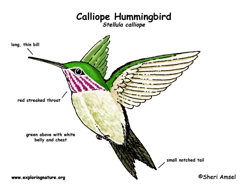 hummingbird diagram of color craftsman lt2000 solenoid wiring (calliope)