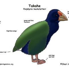 How To Do Class Diagram Back Of Head Sinus Takahe