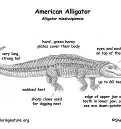 diagram of crocodile data schematic diagram alligator body parts diagram labeled [ 1650 x 1275 Pixel ]