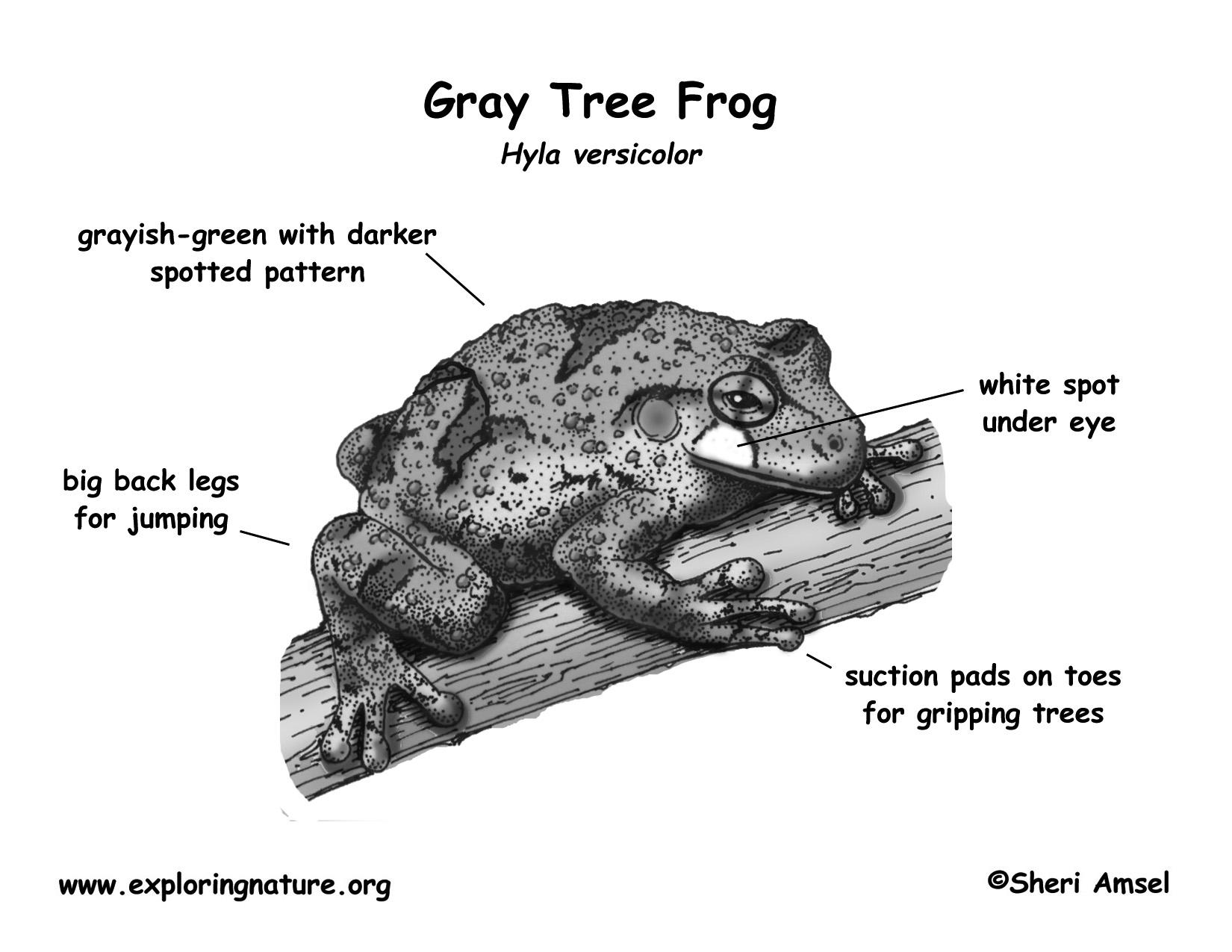 Frog Gray Tree