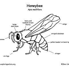 Diagram Of A Queen Bee Jeep Cj7 Dash Wiring Honeybee