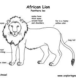 african lion diagram with labels best secret wiring diagram u2022 diagram of a sea lion lion body diagram [ 1650 x 1275 Pixel ]