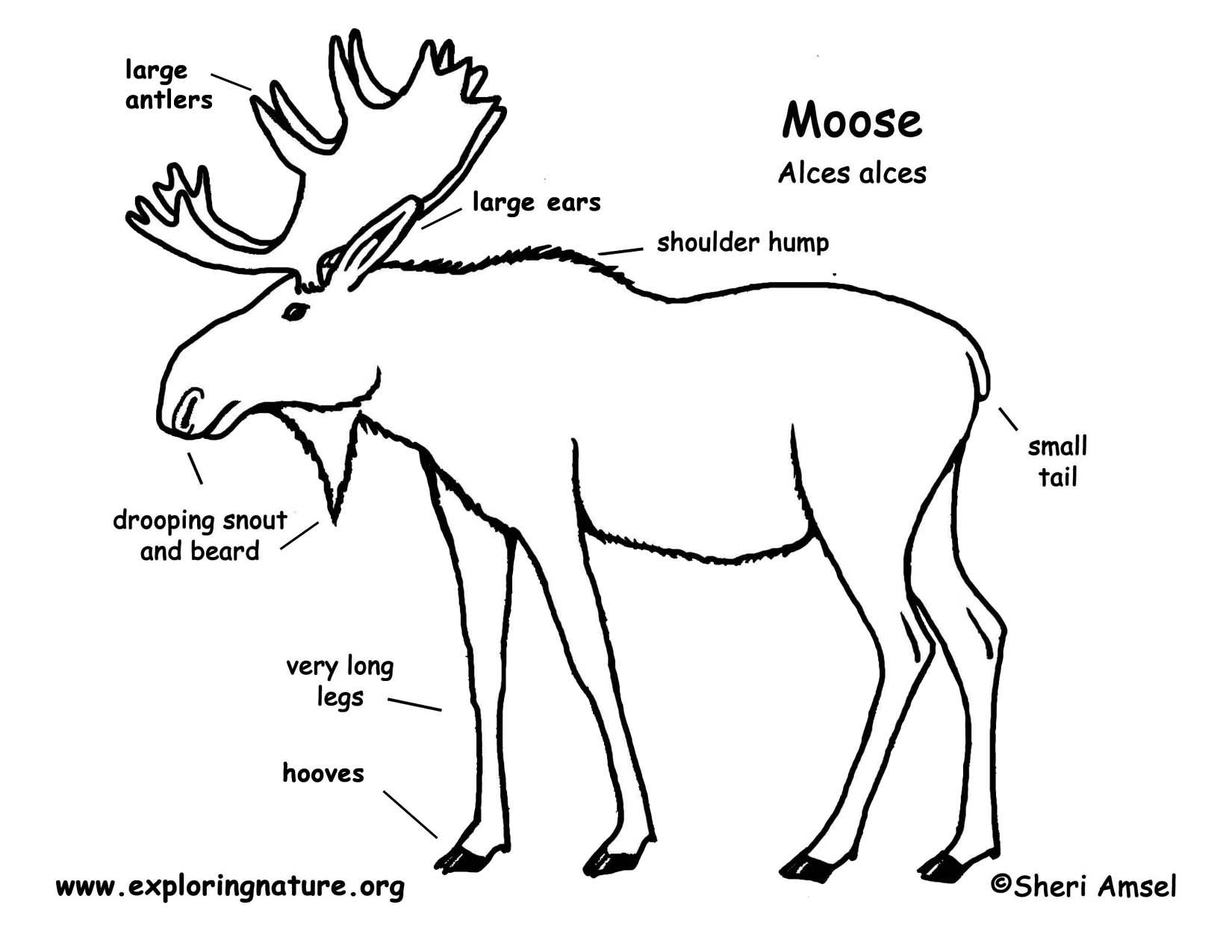 ear nose throat connection diagram usb wiring wiki of moose great engine schematic