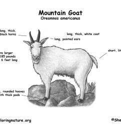 goat diagram [ 1650 x 1275 Pixel ]