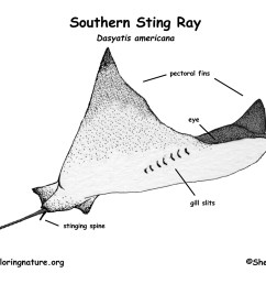 ray fish diagram label wiring diagram database ray fish diagram label [ 1650 x 1275 Pixel ]