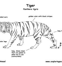 tiger tiger diagram labled [ 1650 x 1275 Pixel ]