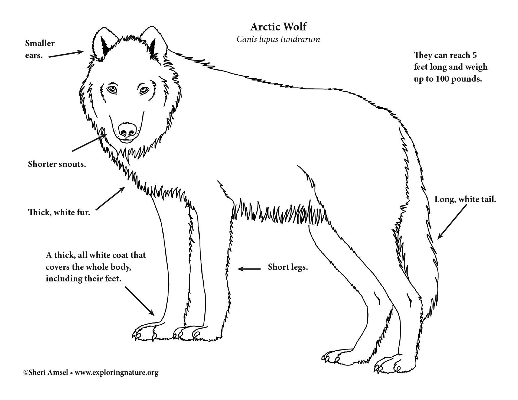 dog skeleton diagram labeled bmw e36 vacuum hose wolf (arctic)