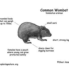 Brown Bear Diagram 2009 Klr 650 Wiring Wombat Common