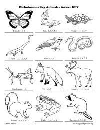 Dichotomous Key For Animals
