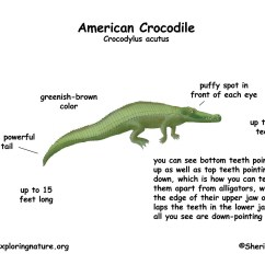 Alligator Food Chain Diagram 2009 Pontiac Vibe Radio Wiring Label Pictures To Pin On Pinterest