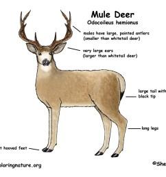 mule body diagram wiring diagrams for mule body diagram [ 1650 x 1275 Pixel ]