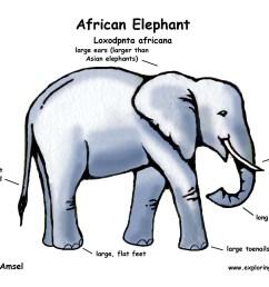 diagram of elephant schematic wiring diagrams rh 26 koch foerderbandtrommeln de elephant skeleton drawing elephant organ diagram [ 2200 x 1700 Pixel ]