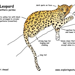 Snow Leopard Anatomy Diagram Block Reduction Problems And Solutions