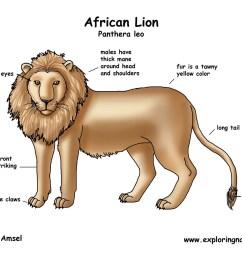 lion african crayfish diagram labeled download hi res color diagram [ 1650 x 1275 Pixel ]
