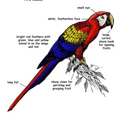 Rainforest Structure Diagram Kenmore Elite Parts Macaw Scarlet