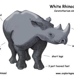 rhino head diagram wiring diagram forward rhino head diagram [ 1650 x 1275 Pixel ]