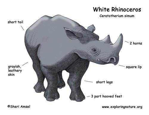 small resolution of rhino head diagram wiring diagram forward rhino head diagram