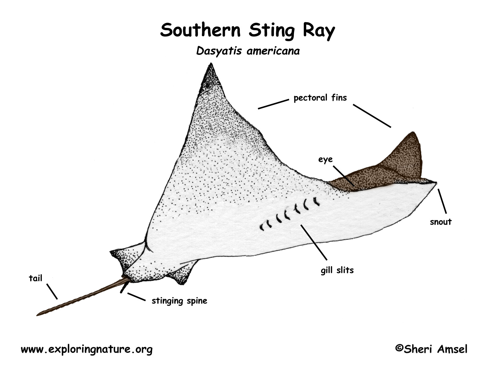 origami manta ray diagram