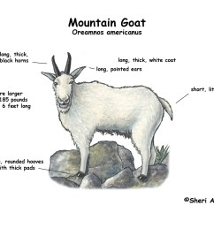 goat meat cuts diagram goat free engine image for user manual download eye diagram label human [ 1650 x 1275 Pixel ]
