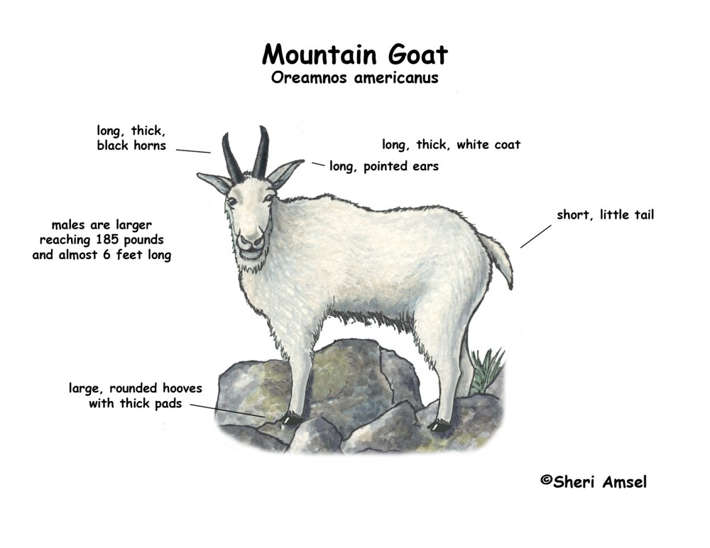medium resolution of goat meat cuts diagram goat free engine image for user manual download eye diagram label human
