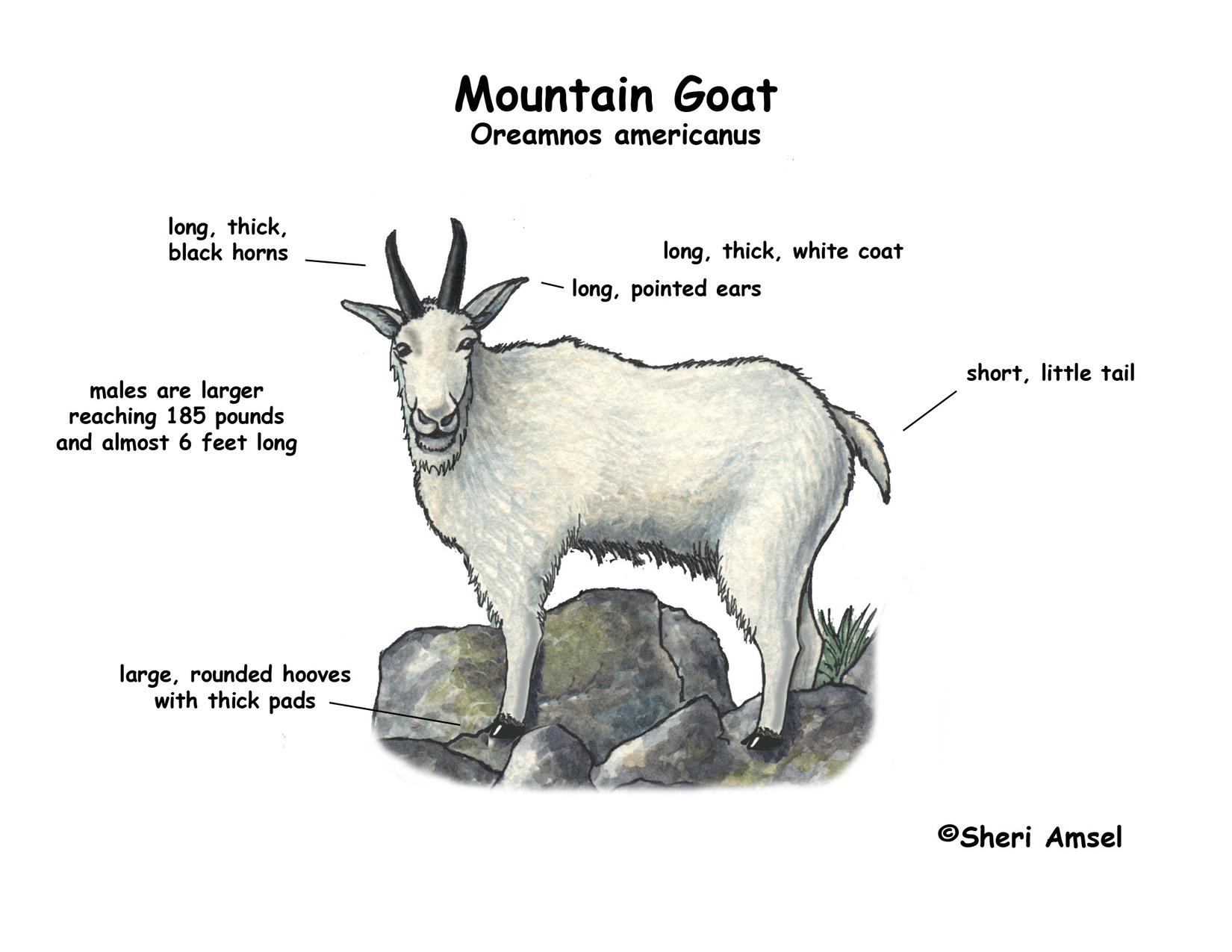 hight resolution of goat meat cuts diagram goat free engine image for user manual download eye diagram label human