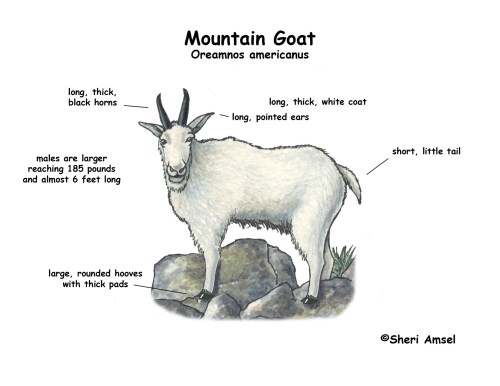 small resolution of goat meat cuts diagram goat free engine image for user manual download eye diagram label human