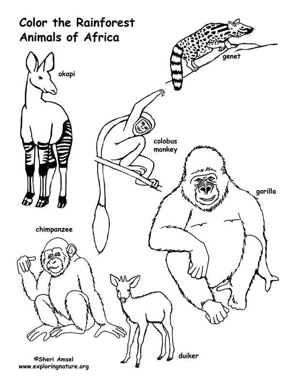 Rainforest (African) Animals Coloring Page