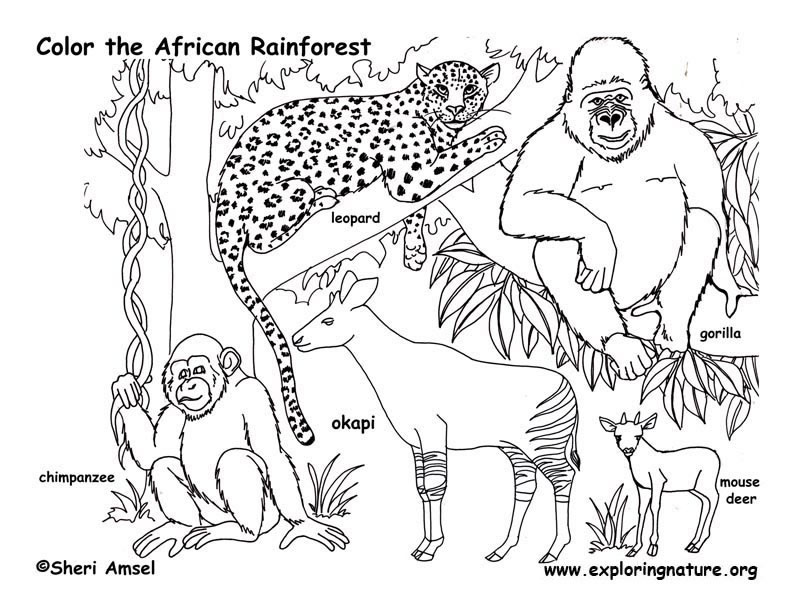 Amazing Coloring Pages: rainforest animal coloring pages